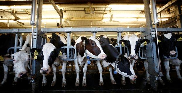 Le canada pret a offrir un acces aux usa a son marche laitier