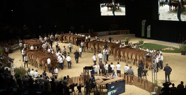 Concours de bovins
