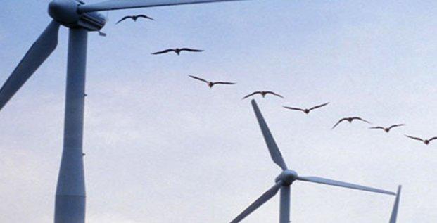 Biodiv-Wind (Béziers) a développé la solution SafeWind pour réduire le risque de collision entre les pales d'éoliennes et les oiseaux
