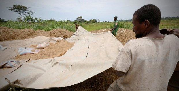riz agriculture cote d'ivoire