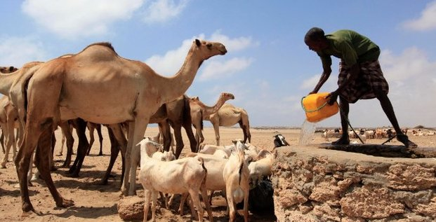 somalie elevage camelin caperin source eau