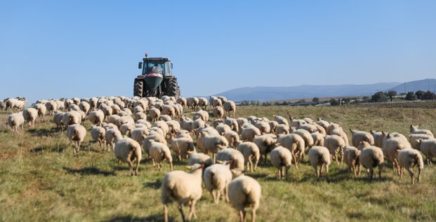 mouton agriculture