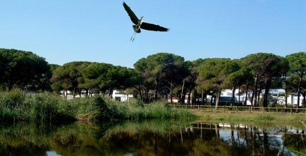 L'un des pilotes développés par Ecofilae, en Catalogne