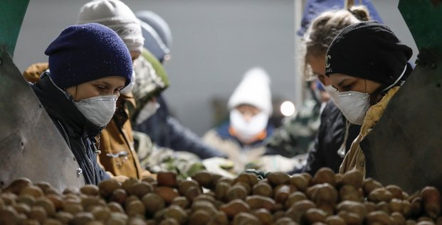 Russie / Coronavirus / Alimentation / Agroalimentaire : des employés, occupés à traiter des pommes de terre, portent des masque