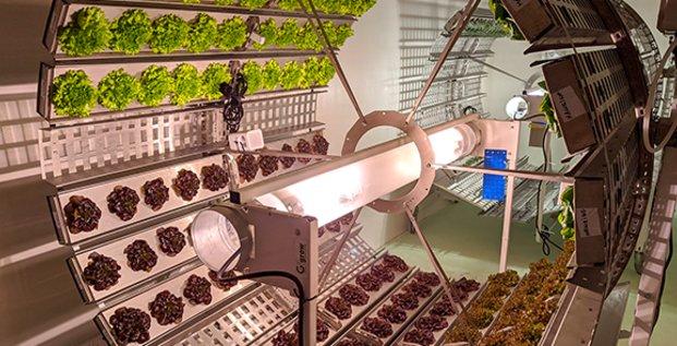 Futura Gaia développe un mode d'agriculture verticale de précision en sol vivant