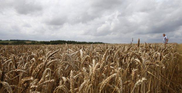 Blé, France, agriculture, céréales, agroalimentaire, paysan, rural, champ, récolte, moisson, fermier,
