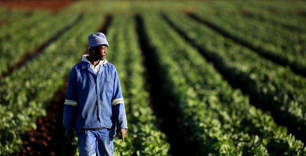 Agriculture plantation agriculteur terre ferme