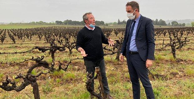 Michael Delafosse (président de la Métropole de Montpellier) dans les vignes suite à l'épisode de gel (avril 2021)