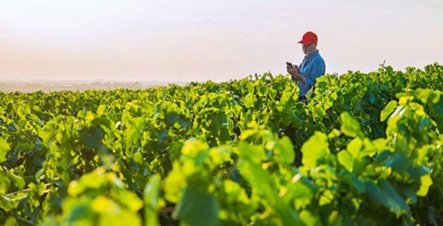 ITK lance un service d'alertes agro-climatologiques pour l'agriculture