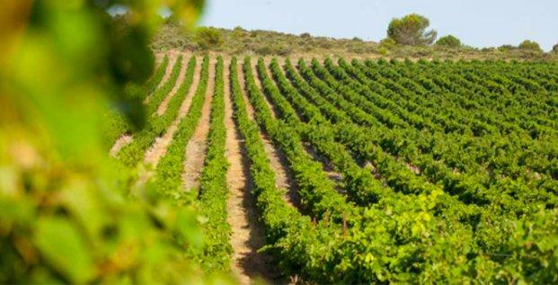 Vignoble en Languedoc-Roussillon