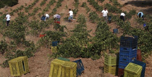 travailleurs champs