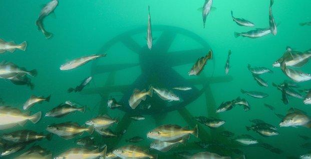 Énergies marines renouvelables : Sabella en pôle sur l'hydrolien