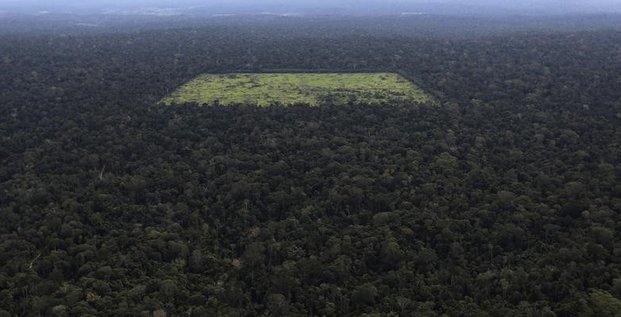 La déforestation de l'Amazonie s'est accélérée en 2013