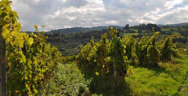 vignes côte-roannaise