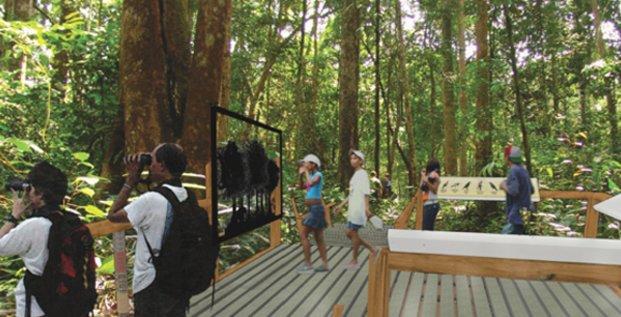 Biotope au Gabon