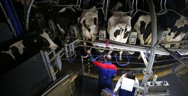 Lait, producteurs laitiers, traite des vaches, ferme de Rouans, France,
