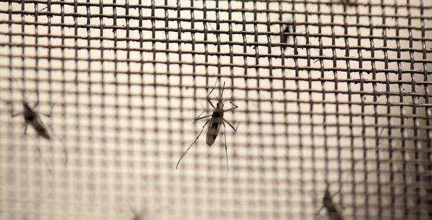 Le virus zika pourrait s'etendre a l'europe a la faveur de l'ete