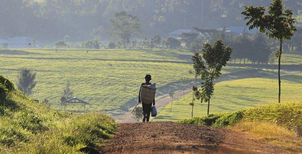 Afrique, agriculture, fermier, cultivateur, Kenya,