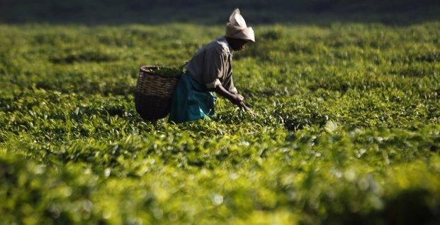 agriculture rwanda