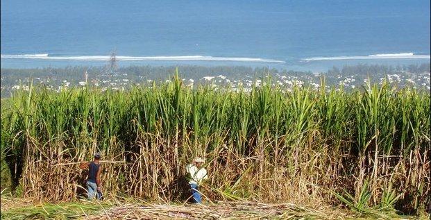 Production de sucre