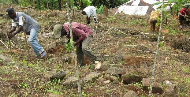 Cameroun agriculture développement