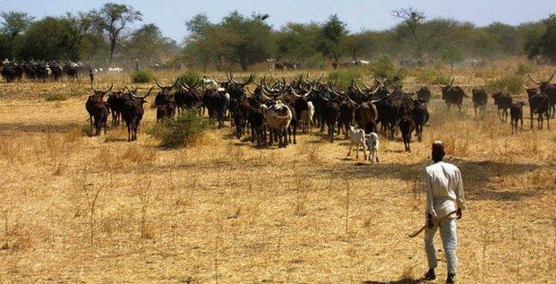 élevage Cameroun pastoralisme