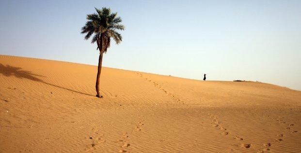 Afrique, sahara, désert, palmier, dattier, désertification, Algérie,