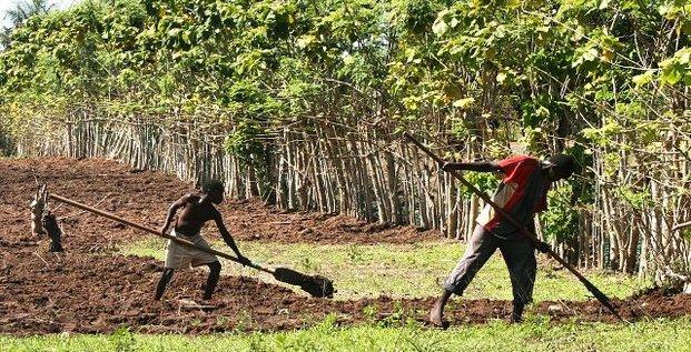 riz riziculture sénégal