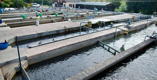 pisciculture poisson élevage