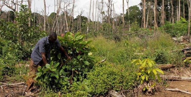 deforestation forêt Côte d'Ivoire Cacao