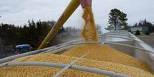 maïs agriculture