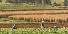 Hydromet en Afrique : prévoir la météo pour prévenir la sécheresse