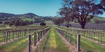 viticulture, vigne, vin