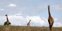 A paris, une reserve virtuelle pour decouvrir la faune sauvage