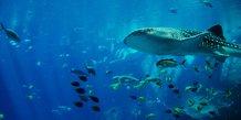 Plongée, océan, poissons