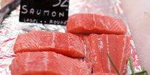 Saumon, poisson, algue toxique, Norvège,