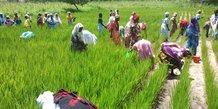 Sénégal agriculture femmes