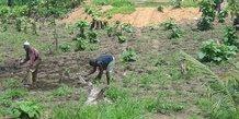 agriculture Togo
