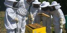 Des ruches chez Roche Diagnostics