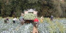 Agriculteur Bledina
