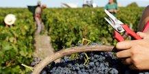 Apres une annee 2018 hors norme, la production mondiale de vin a baisse en 2019