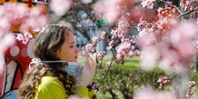 Arbre en fleurs pendant l'épidémie de coronavirus