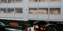 Peste porcine: interruption des exportations de viande de porc allemande vers la chine