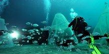 Relâcher de poissons par Ecocean