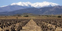 Vignes dans les Pyrénées-Orientales