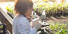 NFL Biosciences développe un candidat médicaments botanique pour le traitement des addictions tabagiques