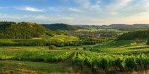 vue sur les vignes depuis Menetru-le-vignoble (Jura)