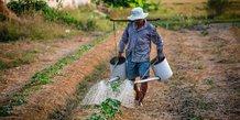 Eau agriculture