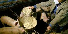 Porc alimentation animale bétail éleveurs agriculture coût