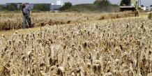 Blé, agriculture, céréales, prix, élevage, farine, Europe, Douai, Rouen, port céréalier, exportations, balance, commerce, agro-business, France, blé, ble,